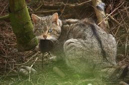 CHAT_FORESTIER_20160424_WALB5455