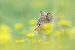 CHAT_FORESTIER_20140430_WALB8592
