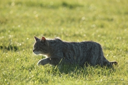 CHAT_FORESTIER_20160503_IMG_1962