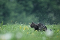 CHAT_FORESTIER_20160512_IMG_2517